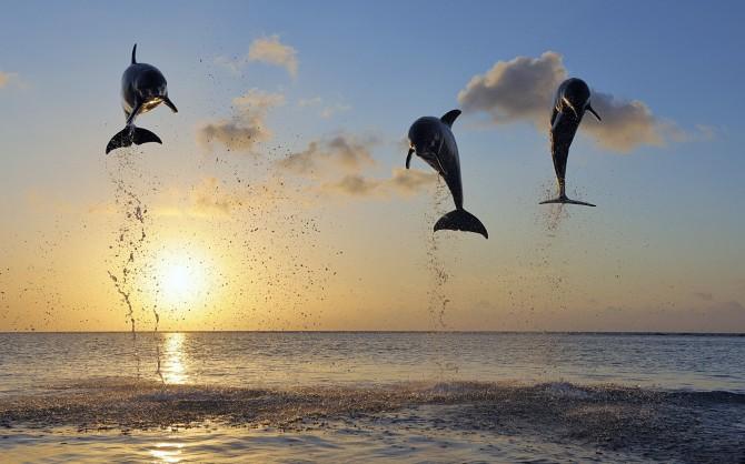 Отдых на море в Затоке — полезно знать отдыхающим ресторана Феличита Image